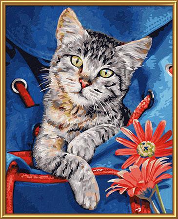 Malen nach Zahlen Bild Katze im Rucksack - 609240842 von Schipper