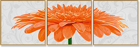 Chrysanthemum Grandiflorum Orange - Triptychon