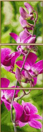 Malen nach Zahlen Bild Orchideenrispe - Triptychon - 609470739 von Schipper