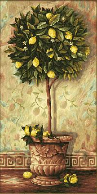 Malen nach Zahlen Bild Citrus limonum - 609220397 von Schipper