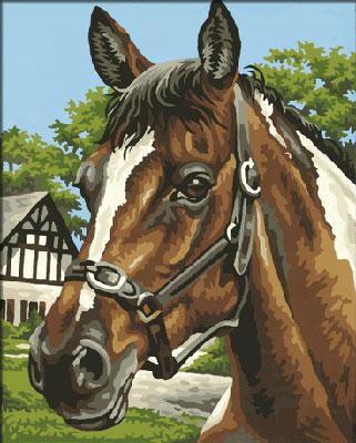 Malen nach Zahlen Bild Pferdeporträt - 609240381 von Schipper